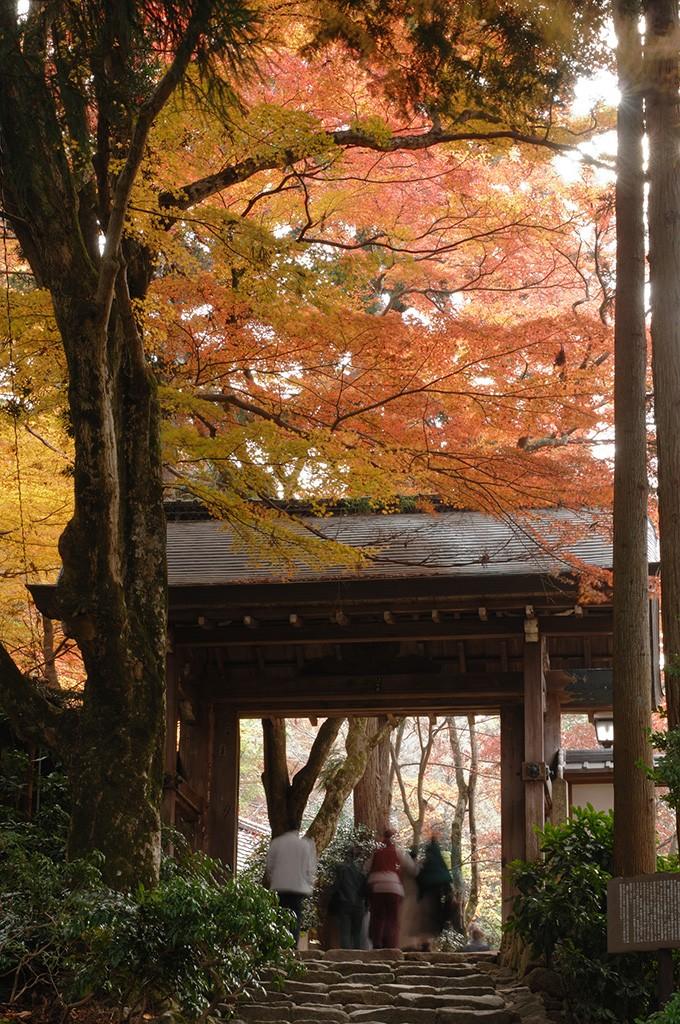 24-瑞宝寺公園の紅葉1_ar0125